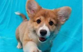 Какую собаку лучше держать в квартире, комнатные маленькие собачки породы