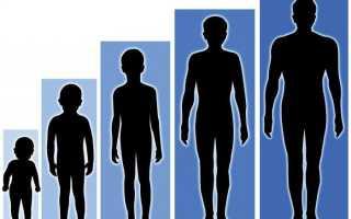 Факторы влияющие на рост и развитие организма – с чем связано увеличение?