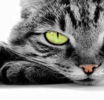 Видеть во сне кошку к чему, сонник гладить кота