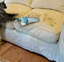 Чесалка для кошек: зачем нужна, разновидности устройств для чесания, как сделать своими руками, где удобно разместить, советы