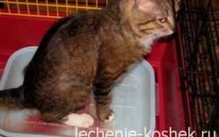 Цистит у котов и кошек: симптомы (кровь в моче и другие) и лечение в домашних условиях, лекарства (таблетки и прочие), советы ветеринаров