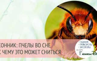 К чему снится оса или пчела, к чему снятся дохлые пчелы