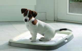 Как приучить собаку к улице после пеленок, до скольки месяцев щенок будет писать дома