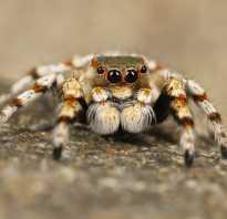 Кто такой паук насекомое или животное, паучьи глаза
