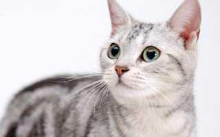 Осложнения после стерилизации у кошки: какие последствия после кастрации кота?