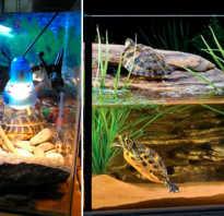 Как сделать террариум своими руками: аквариум для тараканов