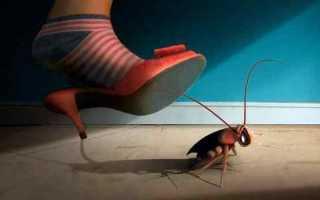 К чему снятся тараканы живые женщине, сонник прусаки много