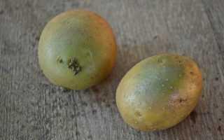 Что будет если съесть зеленую картошку, зеленый картофель