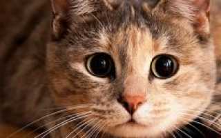 Почему кот постоянно лижется и чешется: симптомы зуда у кошек