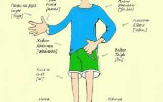 Части тела по английски для детей