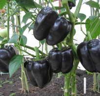 Чем подкормить перцы во время цветения и плодоношения: минеральные, органические и народные средства