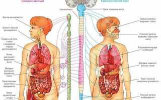 Вегето сосудистая дистония лечение у взрослых, все симптомы ВСД